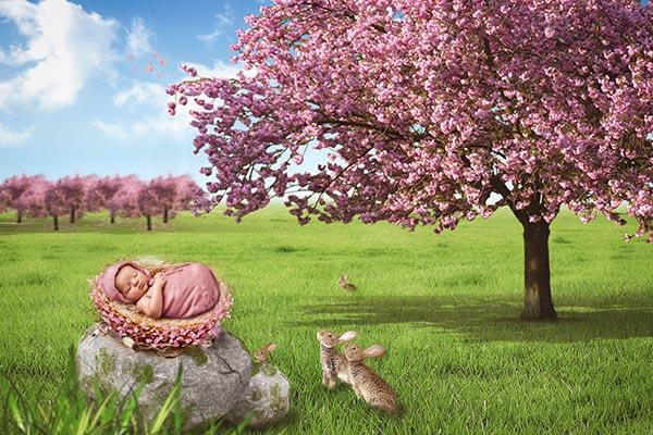 Newborn Cherry Tree